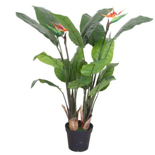 paradise-plant